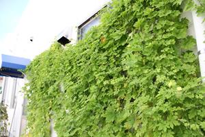 緑化推進活動